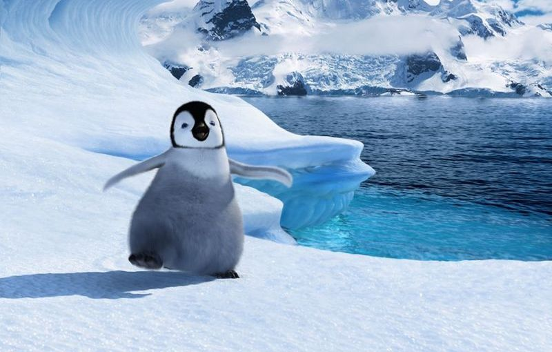 Reefer Containers – The Best Tool for Shipping Penguins!