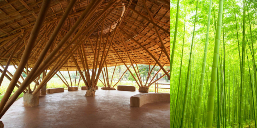 The Benefits of Bamboo Plywood